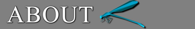 about-title-banner